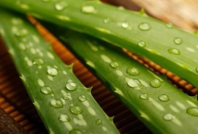 propiedades y beneficios del aloe vera
