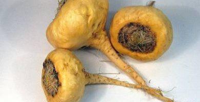 beneficios de la maca peruana