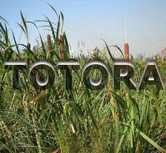 beneficios de la totora