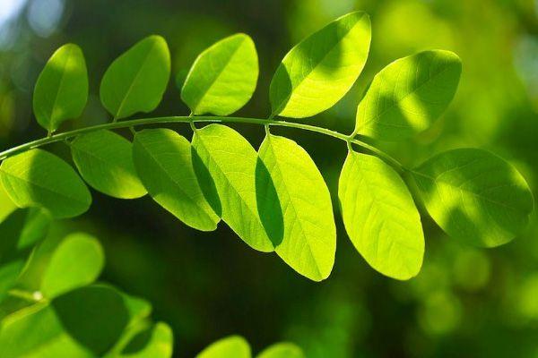 Porque son importantes las plantas importancia for Porque son importantes los arboles wikipedia