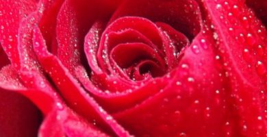 para que sirve la miel de rosas