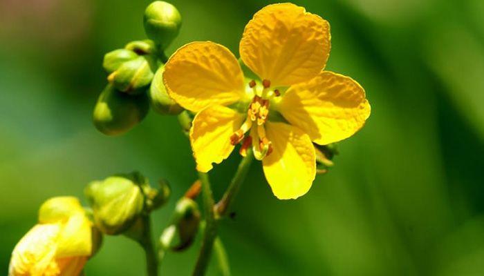 planta brusca