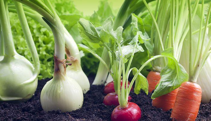 ejemplos de hortalizas