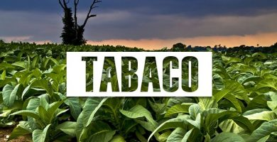 propiedades del tabaco