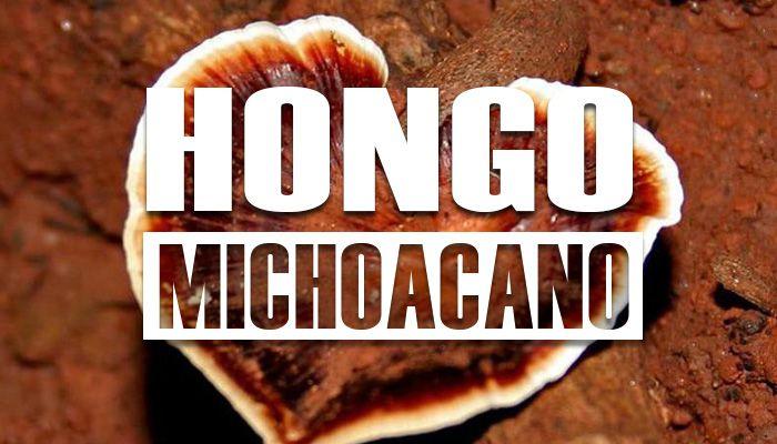 Para que sirve el hongo michoacano